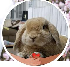 Edward Siu  recommends Rainbow Bridge Pet Cremation Services 彩虹橋寵物善終服務