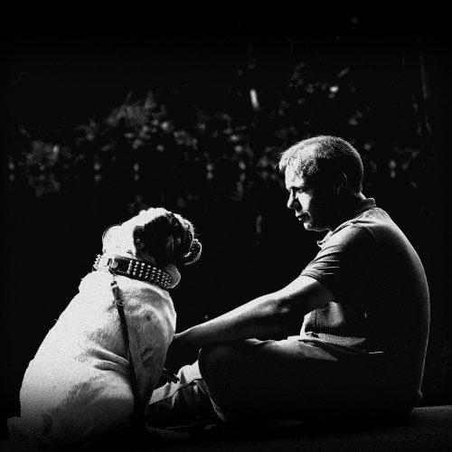 friendship, pet, bulldog